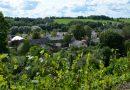 Sabiles Vīna kalnā gatavojas vīnogas un 20. augustā mainās ieejas maksa