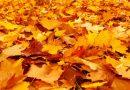 ATCELTS!!! Sabiles tūrisma sezonas noslēguma pārgājiens 11.oktobrī